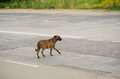 Stray dog on the road Royalty Free Stock Photography