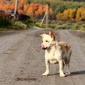 Stray dog on the road Stock Photos