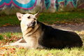 Stray dog sad lying on grass Royalty Free Stock Images