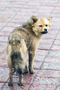 Stray dog sad on the street in a rainy cold day Stock Images