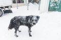 Stray dog in winter Stock Image