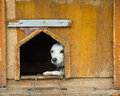 Stray dogs dog in the shelter Royalty Free Stock Photos
