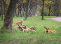 Stray dogs pack of near the tree outdoor Royalty Free Stock Photo