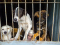Stray dogs in the shelter Royalty Free Stock Photo