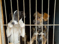 Stray dogs in the shelter Royalty Free Stock Photography