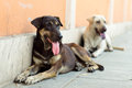Stray dogs two resting at street in bangkok thailand Stock Photo