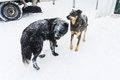 Stray dogs in winter city during time Stock Photography