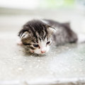 Stray kitten cat with kittens in a shelter Stock Photography