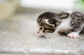 Stray kitten cat with in a shelter Royalty Free Stock Photos