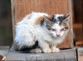 Stray kitten dirty white with orange and brown spots Royalty Free Stock Photos