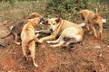 Stray mother dog and pups with big in africa Stock Photography