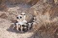 Stray puppies Stock Image