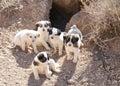 Stray puppies Stock Photos