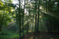 Streaks of sunlight coming down through the trees on an early spring morning Royalty Free Stock Photos
