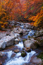 Stream acrossing golden fall forest Royalty Free Stock Photo