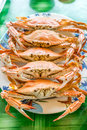 Stream crabs on white dish Stock Photography