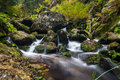 Stream detail creek cascades in the summer autumn taken a long exposure Stock Images