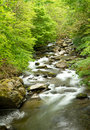 Stream in Devon countryside Royalty Free Stock Photo