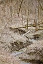 Stream Down the Early Spring Gulley Royalty Free Stock Photo