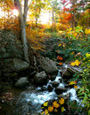 Stream in the fall Royalty Free Stock Photo