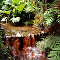Stream flowing in lush jungle Royalty Free Stock Photos
