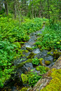 Stream in forest Royalty Free Stock Images