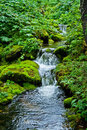 Stream in forest Stock Photography