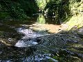 Stream at Pewitts Nest