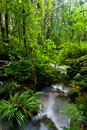 Stream and Rainforest at  Intanon National Park Stock Photo