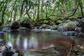 Stream in rainforest and natural pool a freshwater runs into a deep the of the island of riaitea french polynesia the beautiful Stock Images