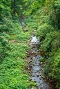 Stream river in the mountain aerial view Royalty Free Stock Photo