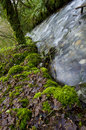Stream in rocky valley cornwall Royalty Free Stock Image