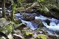 Stream in rocky valley cornwall Royalty Free Stock Photos