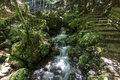 A stream with a small waterfall surrounded with lush green veget vegetation in forest in japan near kyoto on the right stone Stock Photos