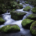 Streamlet in a forest Royalty Free Stock Photo
