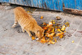 Street cat with leftovers eats in an alley in morocco Royalty Free Stock Image