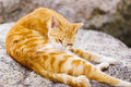Street cat lying on the rock Royalty Free Stock Photo