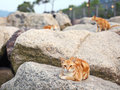 Street cat lying on the stone Stock Photo