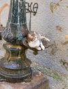 Street Cat in Porto, Portugal Royalty Free Stock Photo