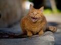Street cat Royalty Free Stock Photo