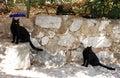 Street Cats In Bakar