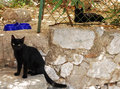 Street Cats In Bakar 1