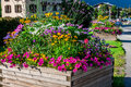 Street decorated by flowers chamonix mont blanc france europe Royalty Free Stock Photography