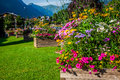 Street decorated by flowers chamonix mont blanc france europe Royalty Free Stock Image