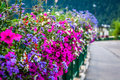 Street decorated by flowers chamonix mont blanc france europe Stock Image