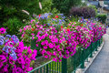 Street decorated by flowers chamonix mont blanc france europe Royalty Free Stock Images