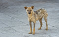Street dog recovered from ringworm cute Stock Photos