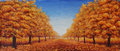 The street is dotted with yellow leaves. Trees in autumn on a background of blue sky with clouds Royalty Free Stock Photo