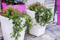 Street flower decoration in sanremo italy white clay pots with flowers on sidewalk Stock Photo
