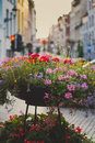Street flowers Royalty Free Stock Photo